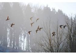 性质,树木,鸟类,动物495382