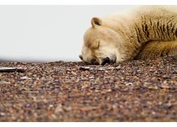熊,动物,睡眠579161