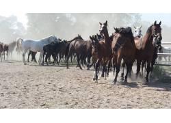马,动物688057
