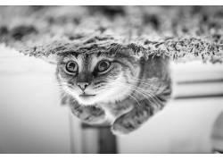 猫,动物,性质,单色526397