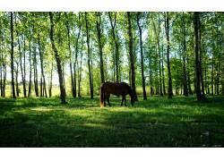 马,性质,乌拉圭,动物,树木424408