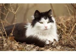 猫,动物,性质,景深612223