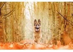 性质,森林,狗,动物491874