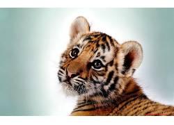 虎,动物,小动物,简单的背景382742