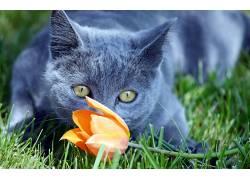 猫,动物,花卉496645