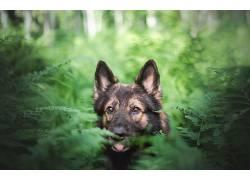 性质,狗,绿色,植物,动物559520