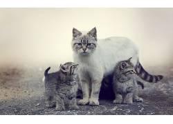 猫,动物,薄雾,小猫569839