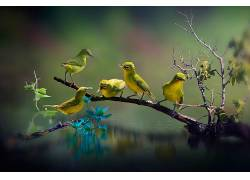 站在树枝上的鸟,黄鹂,水面小鸟,黄色的小鸟,一群小鸟