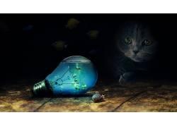 猫,动物,蜗牛,鱼,水,玻璃,聚光灯,灯泡669722
