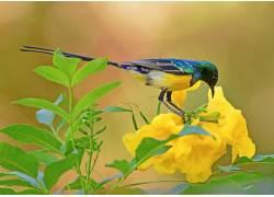 鸟类,华美,植物,花卉,绿色,黄色,黄色的花朵,动物570944