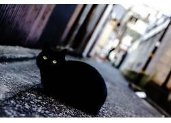 猫,动物,街,景深,绿眼睛478031