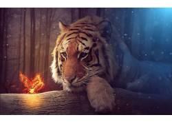 虎,动物,景深563953