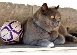 猫,动物,足球671713
