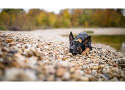 性质,石头,狗,动物573199