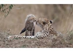 大猫,小动物,动物597289