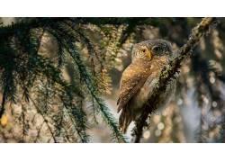 鸟类,性质,猫头鹰,动物579520