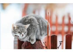 猫,动物,闭着眼睛,篱笆,特写619694