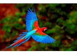 鸟类,鹦鹉,动物,特写,华美630804