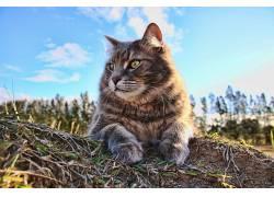 猫,动物409787