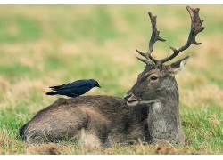 鸟类,鹿,性质,动物489091