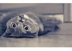 猫,动物412681