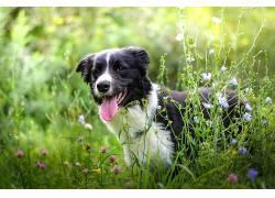 性质,草,花卉,植物,动物,狗553690