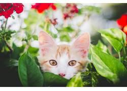 猫,动物,性质526391
