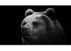 熊,单色,动物,简单的背景386176