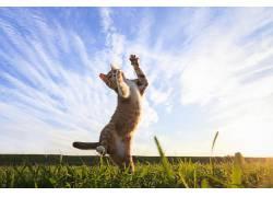 猫,动物,性质526398