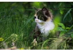 猫,动物,性质576039