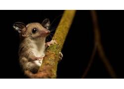 哺乳动物,动物,老鼠635200