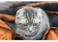 哺乳动物,猫,动物579695