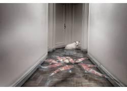 鱼,动物,猫,门厅,门,水549167