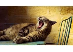 猫,动物,打哈欠,椅子669953