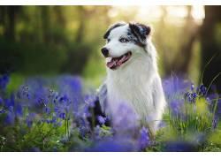 花卉,植物,性质,动物,狗552425