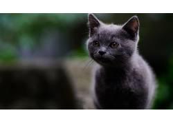 哺乳动物,猫,动物598127