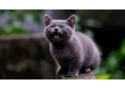哺乳动物,猫,动物598128