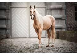 哺乳动物,马,动物583240