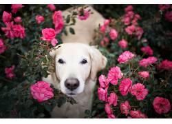 花卉,狗,动物536227