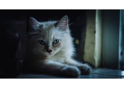 猫,动物,摄影575162