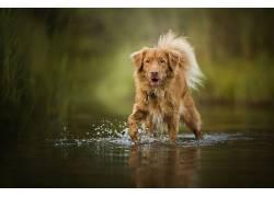 性质,水,狗,动物627789