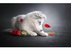 花卉,玫瑰,狗,动物536810