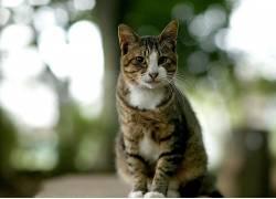 猫,动物,景深,模糊591792