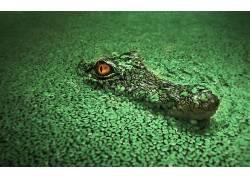 鳄鱼,动物380322