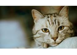猫,动物,景深,眼睛594840