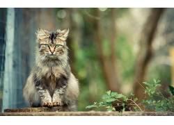 猫,动物,景深527957