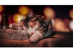 喝杯酒,睡眠,猫,动物616615