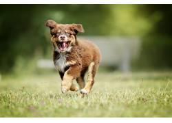 草,动物,跳跃,狗560702
