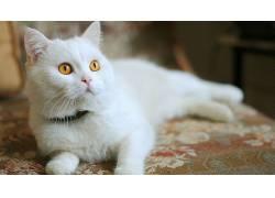 猫,动物,景深591134