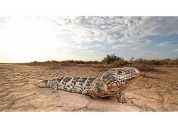 爬行动物,性质,动物569599